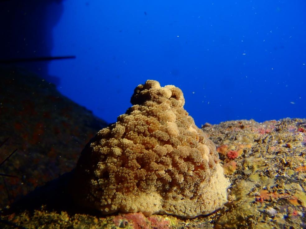 Unterwater in Canarias